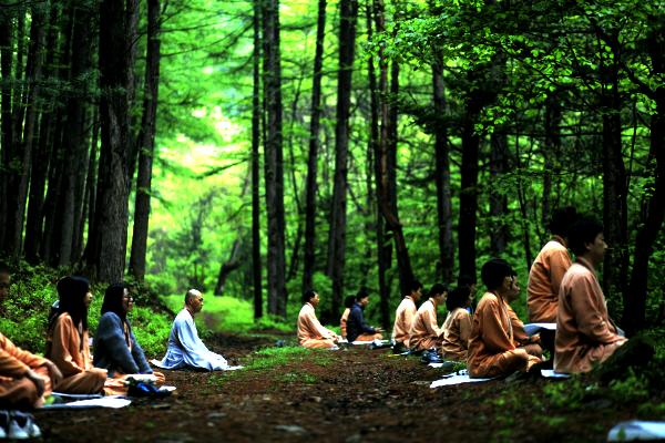 meditation dans le foret